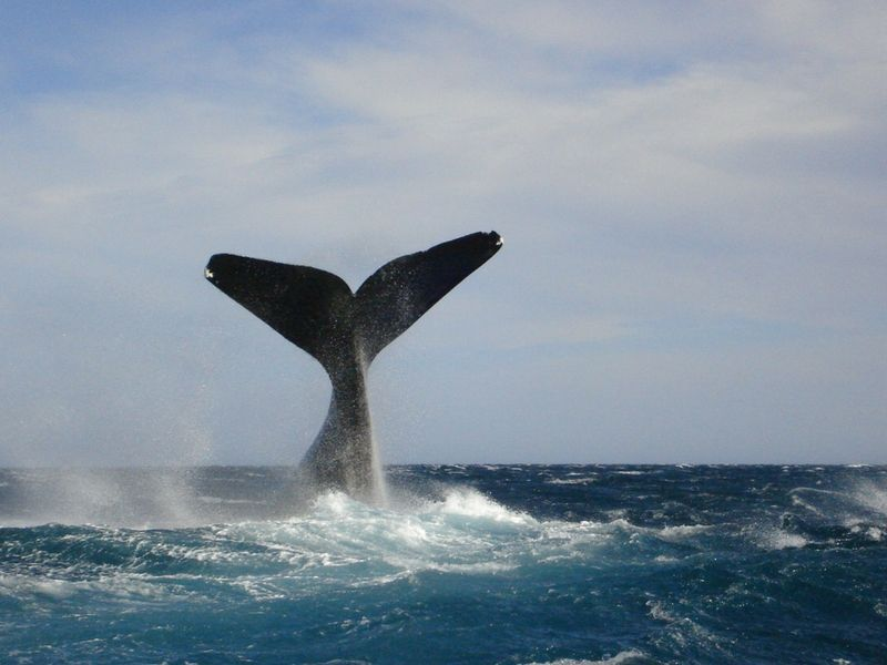 Trelew es la puerta de entrada al mundo de las ballenas.