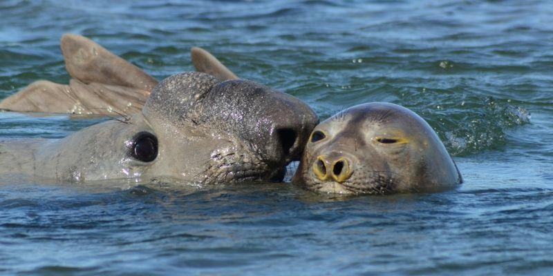 A los lobos marinos se los puede ver en cualquier época del año.