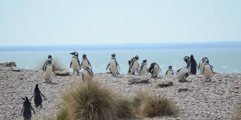 En época estival los pingüinos parmanecen en estas costas.