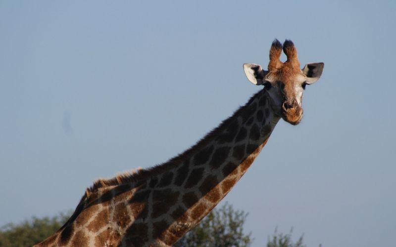 También vimos jirafas.