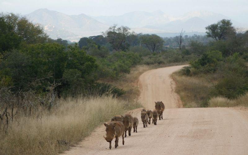 La experiencia de hacer un safari es única. Aquí ellos desfilan frente a nuestro vehículo.