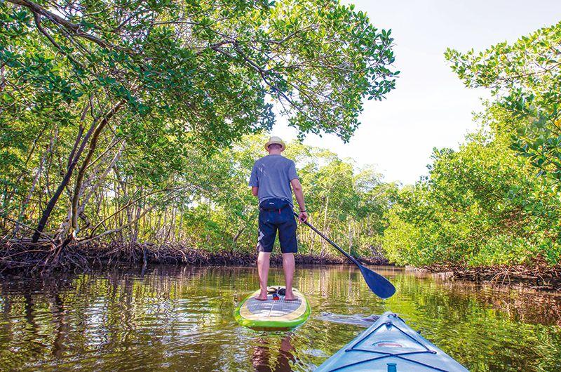 Un paseo por los manglares.