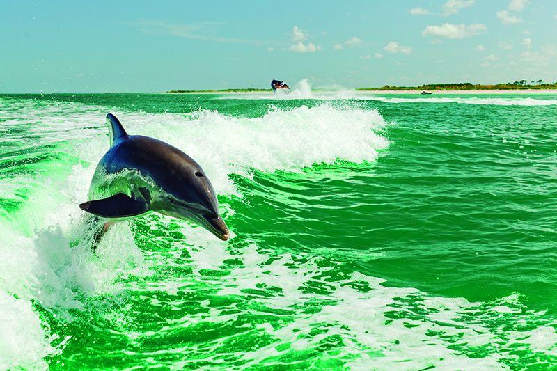 Los delfines son protagonistas en el destino.