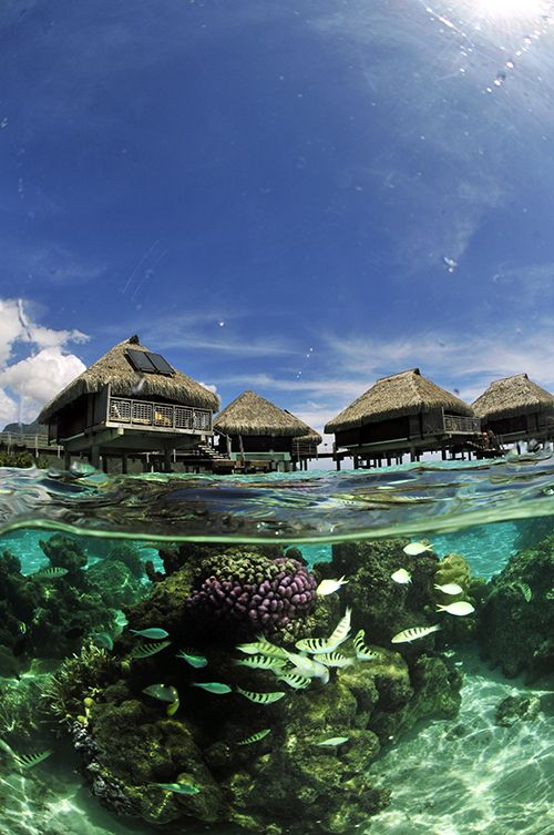 Los bungalows sobre el agua