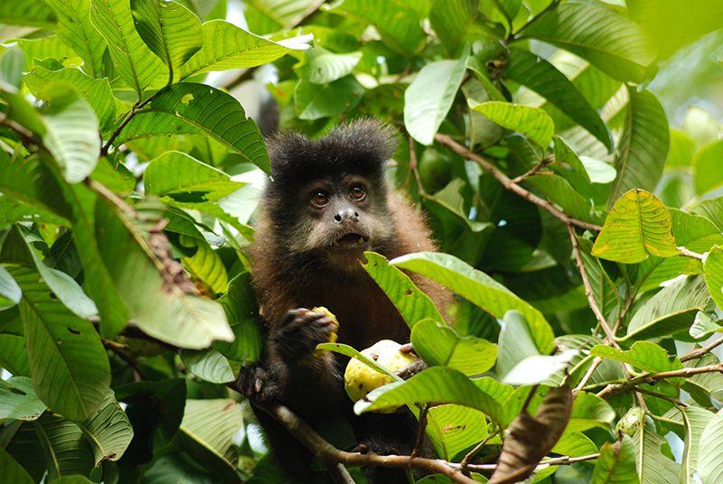 La fauna es otro aspecto a descubrir en Iguazú.