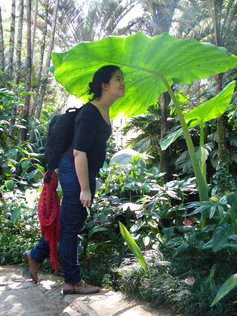 Las gigantes plantas aráceas de Inhotim son una foto simpática que ningún visitante se quiere perder.