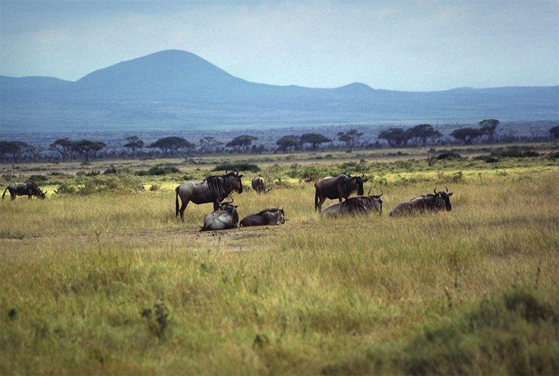 Octubre es el mes ideal para visitar Kenia por la migración de los animales.