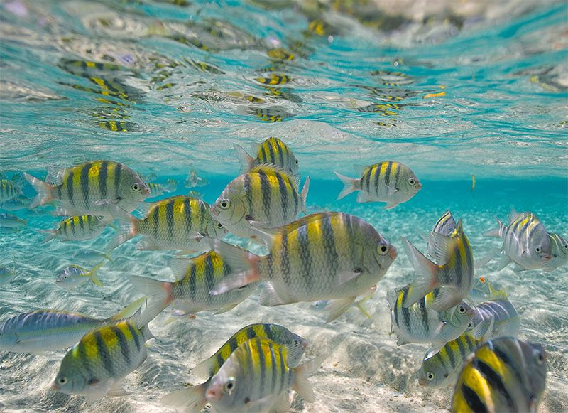 Estos peces han hecho de Punta Rucia su hogar.
