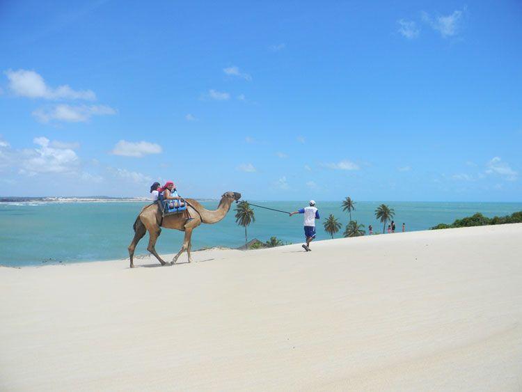Un camello surcando las dunas ¿fantasía o realidad?