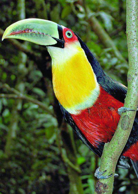 Tips imprescindibles para visitar las Cataratas del Iguazú