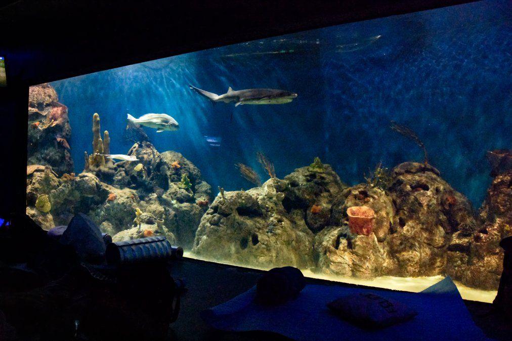 Una propuesta bien diferente: visitar Temaikèn de noche para conocer los hábitos de los animales nocturnos y dormir junto a los tiburones.