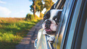 ¿Cómo viajar en auto con las mascotas? Te lo contamos...