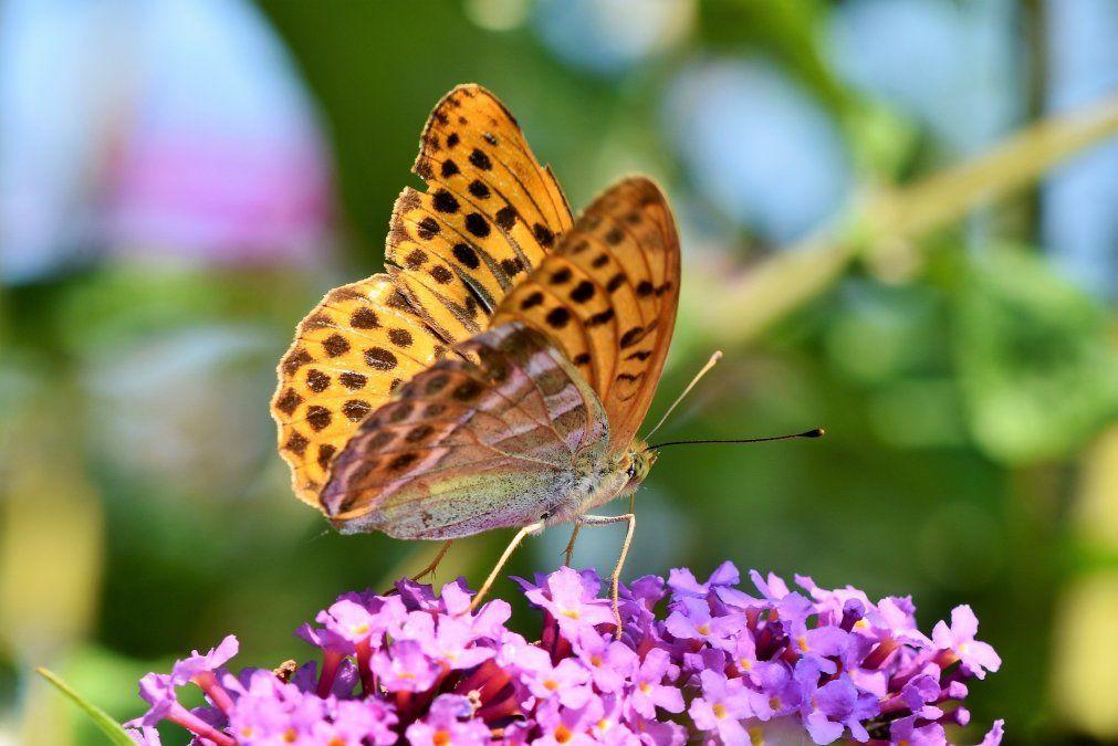 Butterfly Farm es morada de cientos de mariposas de todo el mundo.