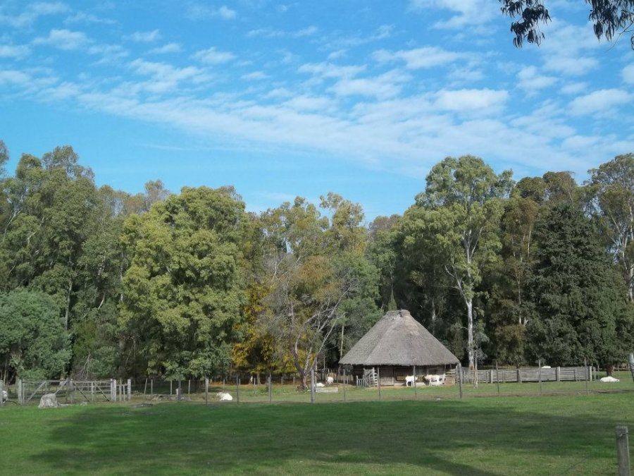 En el Parque Lecocq es posible divisar algunas especias no confinadas en jaulas.