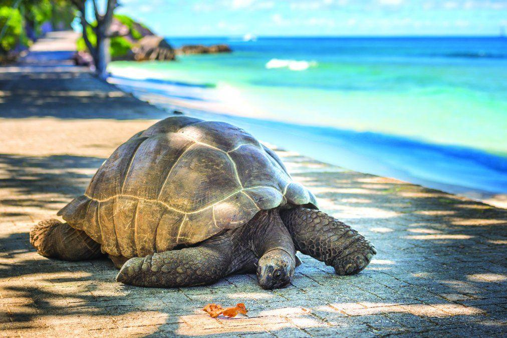 Seychelles también tiene tortugas gigantes. (Foto: Shutterstock Javarman)