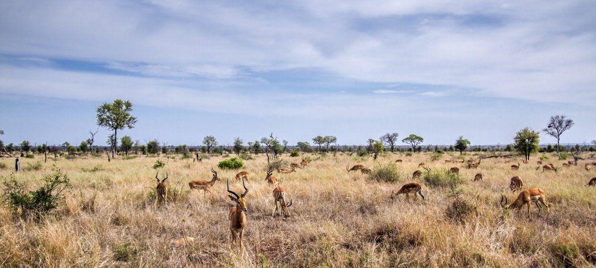 Un safari en Sudáfrica. (Foto: Istock Utopia 88)