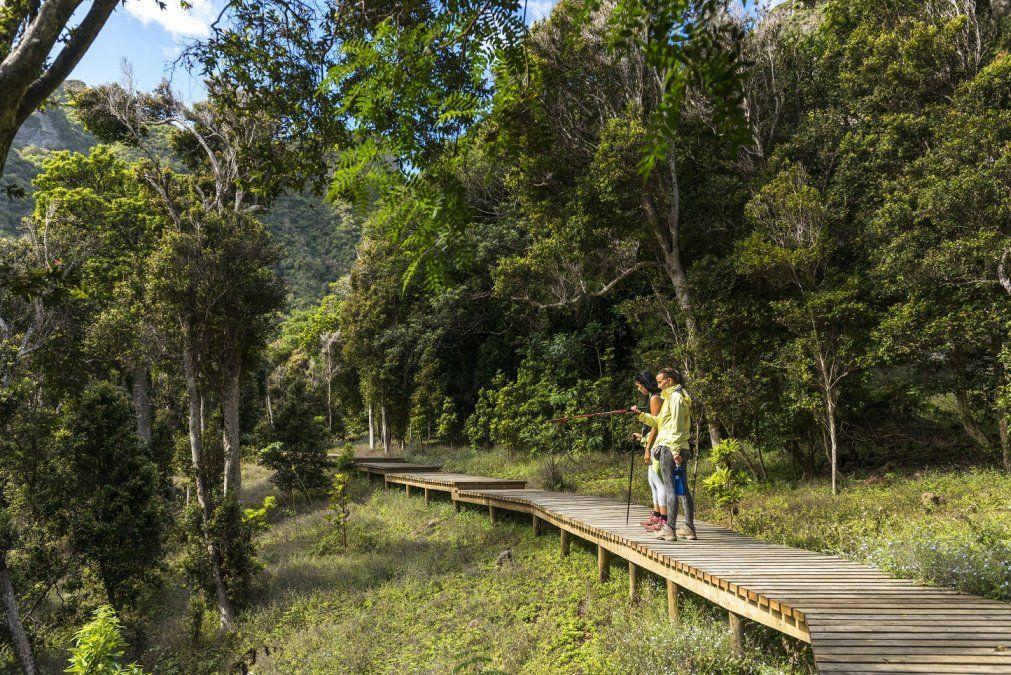 El paseo del volcán Lonquimay está marcado por senderos repletos de araucarias milenarias.