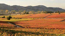 Chile propone una exquisita ruta que saca lo mejor de sus vinos