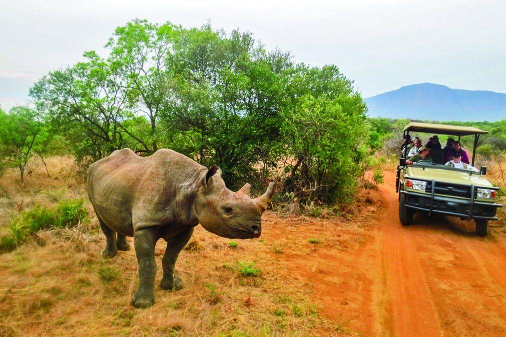 El rinoceronte es uno de los denominados Cinco Grandes de África.