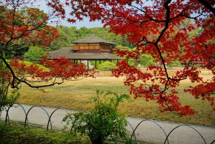 Marzo es el mes indicado para ver los cerezos en flor.