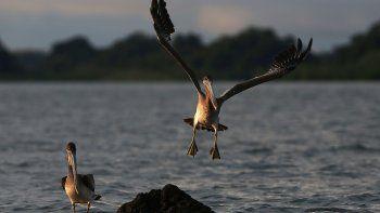 5 destinos para hacer avistamiento de aves en Colombia