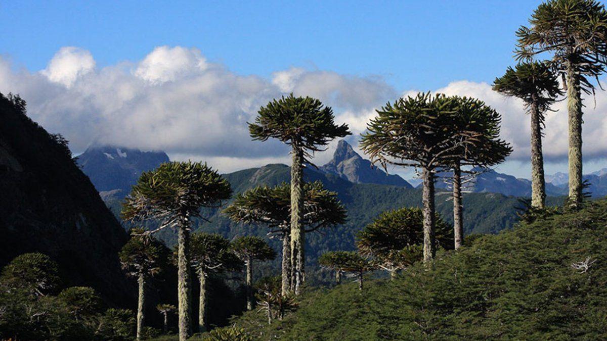 Parque Nacional Villarrica.