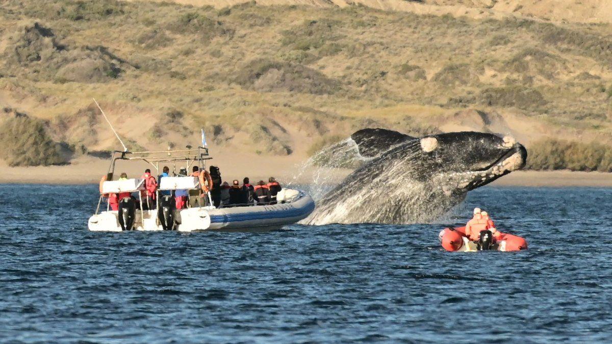 Chubut. Arrancó la temporada de ballenas en Puerto Madryn