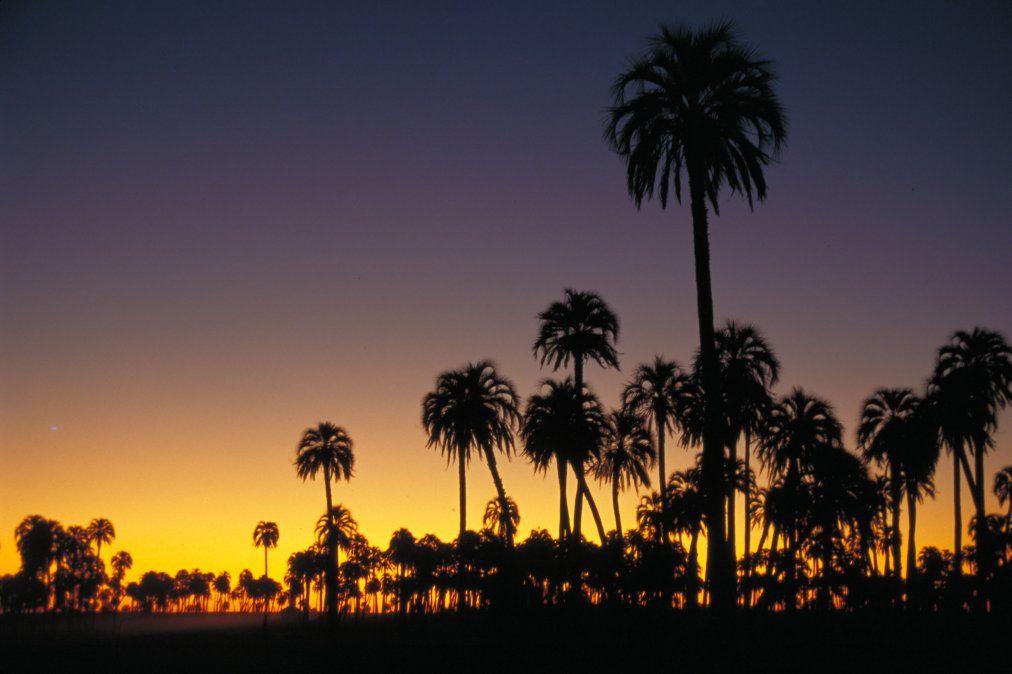 El Parque Nacional El Palmar es uno de los grandes atractivos de la región Litoral en Argentina