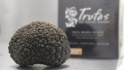 Gastronomía: Trufas del Nuevo Mundo inició la recolección del producto premium de la gastronomía.