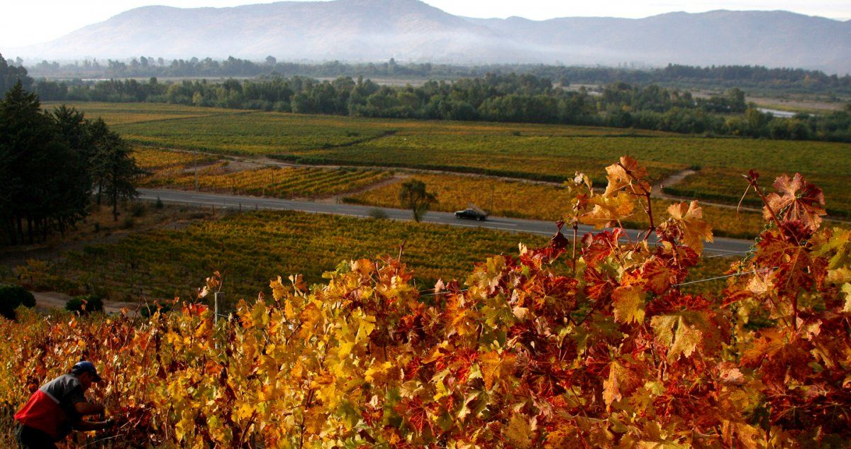 Ruta del Vino del Maule suma nuevas viñas