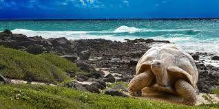Galápagos cuenta con una lista de operadores turísticos autorizados.