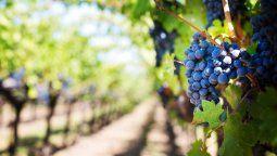 El evento mostró algunos de los mejores vinos y diversas cepas que se encuentran en nuestro territorio.