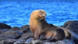 Las islas Galápagos han recibido 4.812 turistas desde su reapertura en julio de 2020.