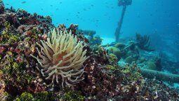 Curazao fue nombrado una vez más como uno de los mejores destinos de buceo en el Caribe y el Atlántico.