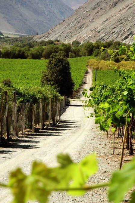 Atacama: en el valle fértil son famosas las aceitunas y el aceite de oliva con denominación de origen.