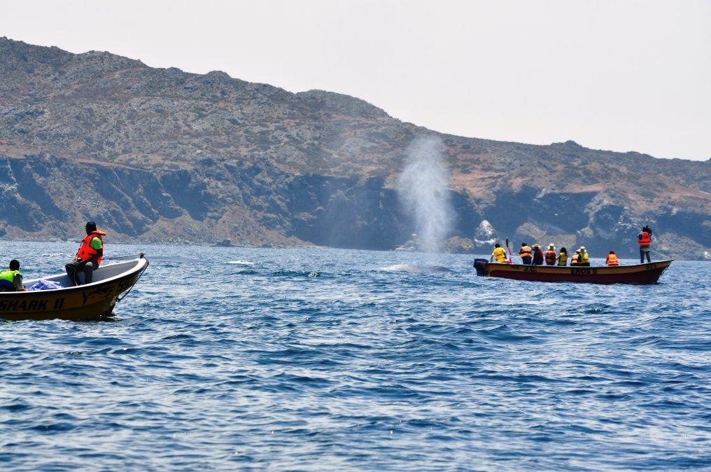 Atacama: en la Reserva Nacional Pingüino de Humboldt pueden avistarse ballenas y otros cetáceos.