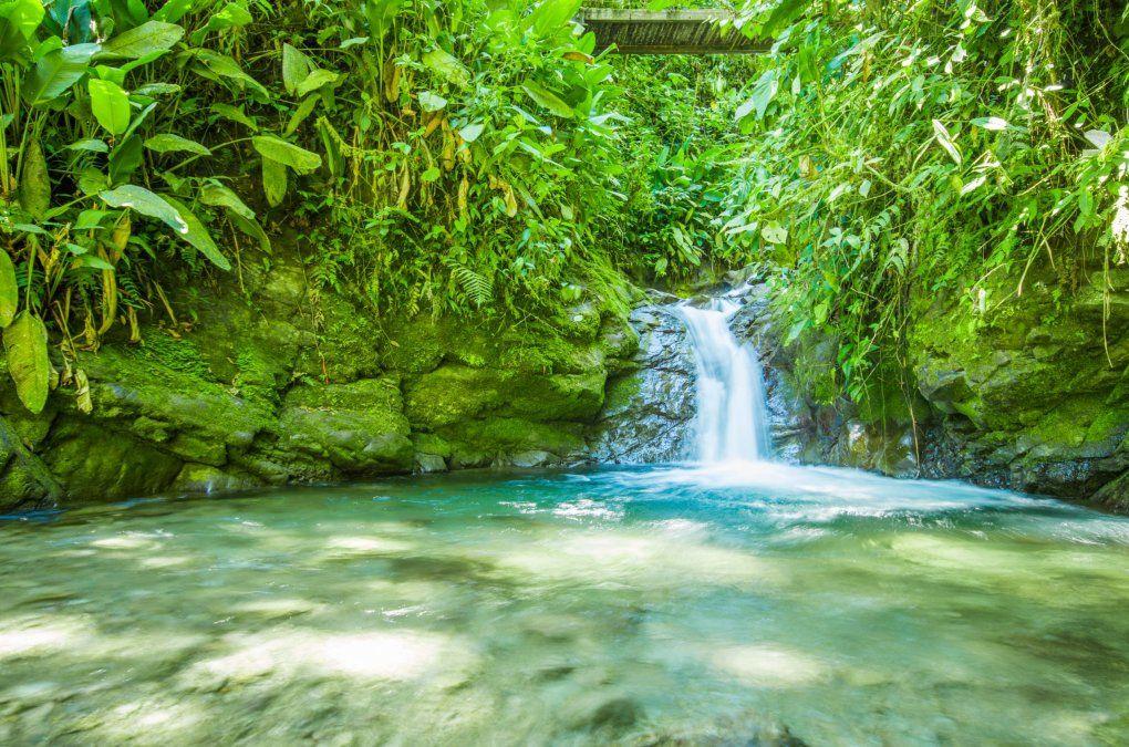 El Chocó Andino posee innumerables atractivos turísticos para los amantes de la naturaleza y la biodiversidad.