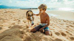 assist card. recomendaciones para viajar con tu mascota