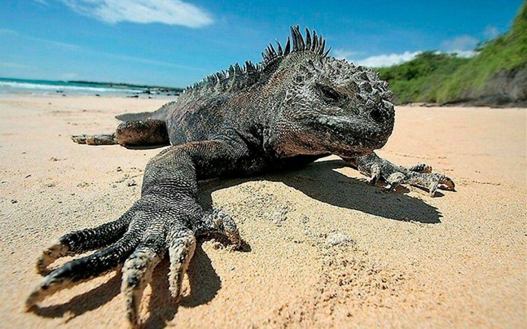 El certificado de vacunación no es un requisito obligatorio para ingresar a Galápagos.