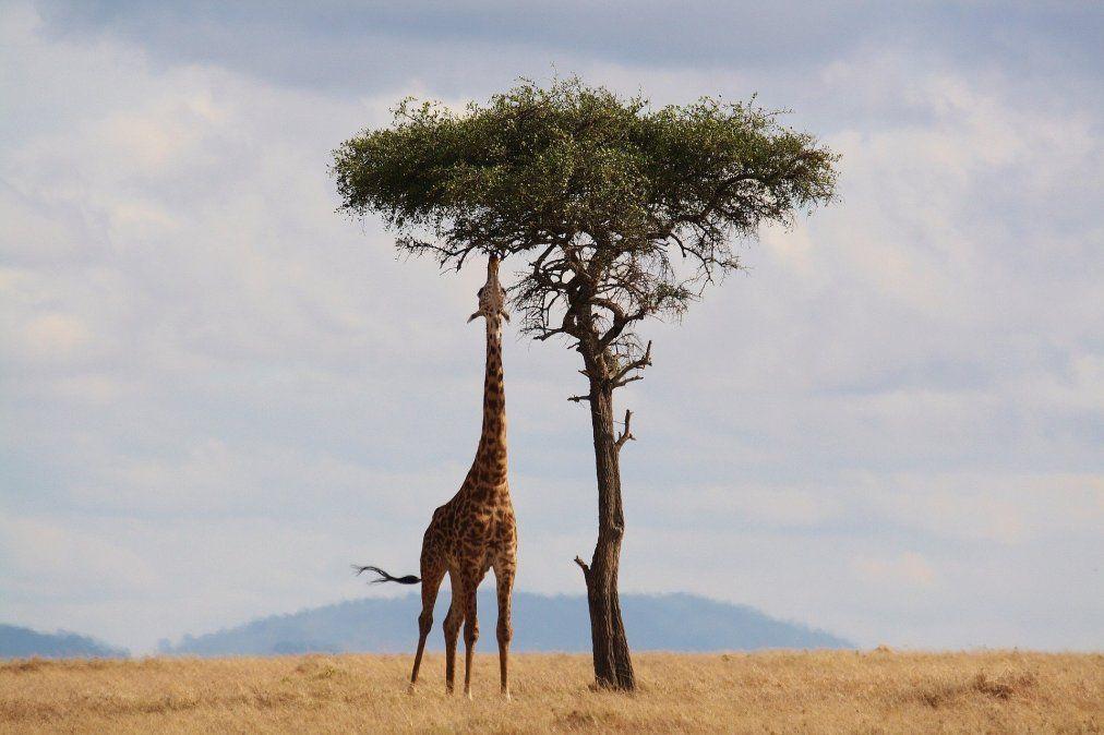 Día de la tierra: naturaleza en todo su esplendor