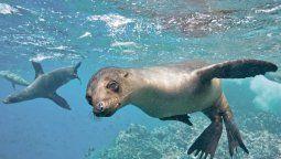 Galápagos, uno de los pilares turísticos de Ecuador.