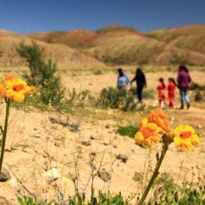 El Sernatur prepara la oferta turística para el Desierto Florido