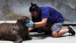 Miles de animales marinos han sido rescatados por SeaWorld.