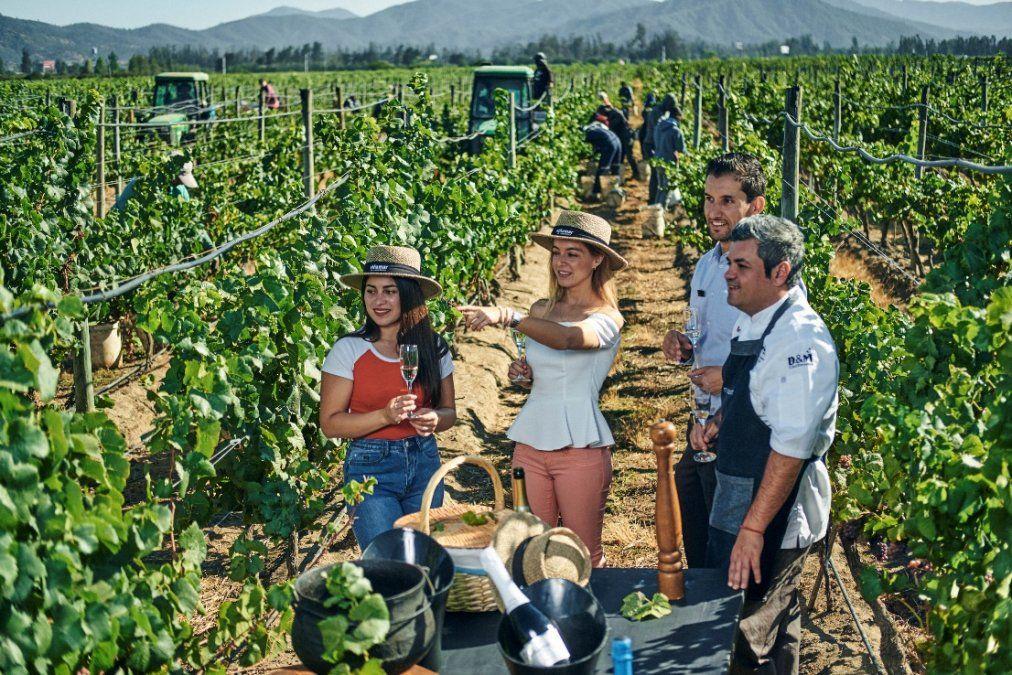 Las actividades permiten participar de los procesos de extracción de uva.