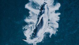 El avistamiento de ballenas es una de las principales atracciones de Puerto López a mediados de cada año.