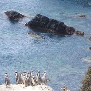 El Parque Nacional Bosque Fray Jorge se renueva y apuesta al turismo astronómico